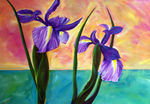dancing Iris's
