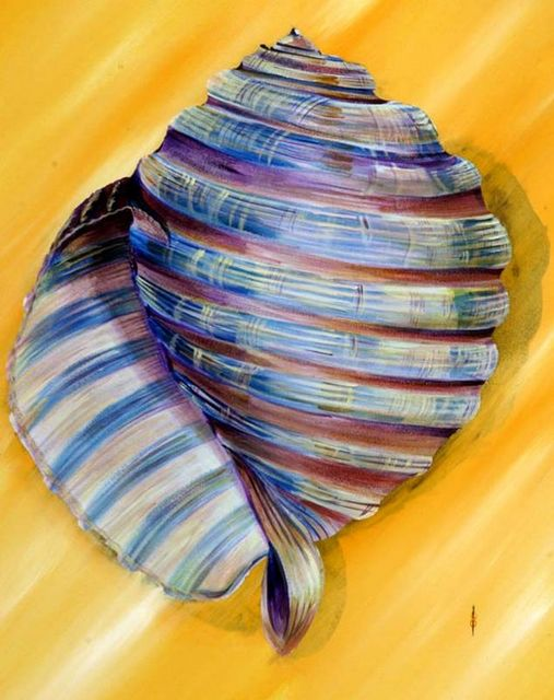 spiral shell SEE INVESTMENT ROOM